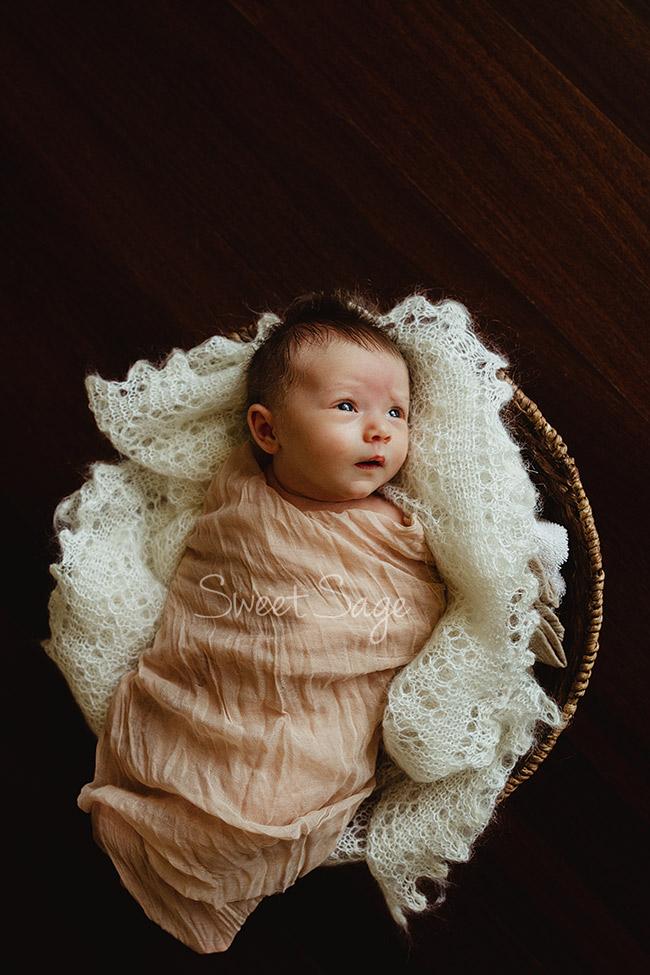 Newborn photos - Madison